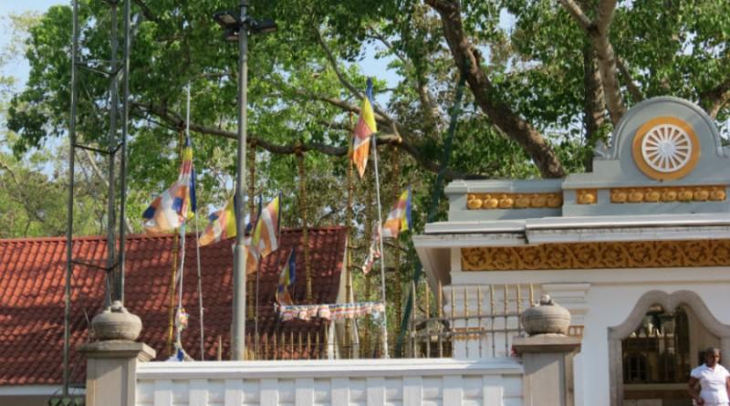 Sri Lanka Anuradhapura Sri Maha Bodhi Bo-tree