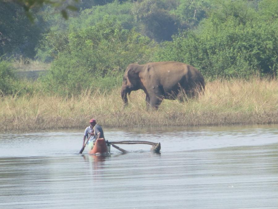 Divlji slon na obali jezera
