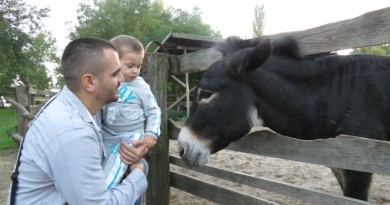 Serbia Subotica Palic zoo donkey
