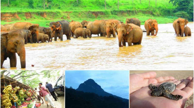 Sri Lanka travel guide information society wildlife and climate