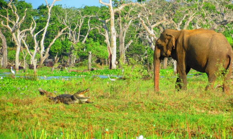 Krokodil i slon poziraju