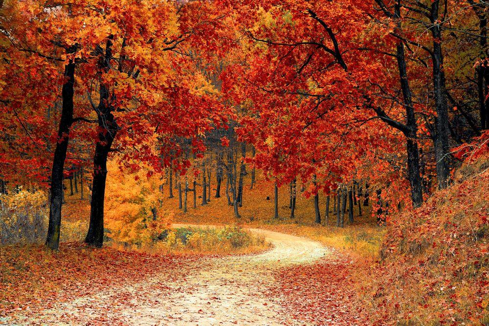 Jesen, crveno lisce pokraj puta