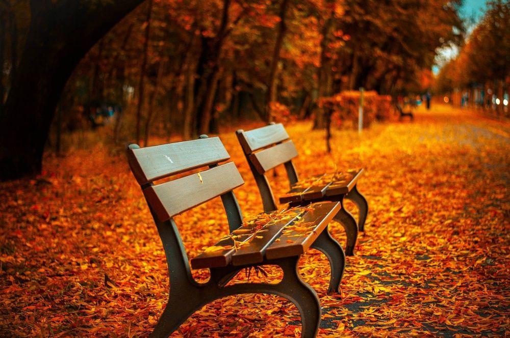 Jesen park i klupe