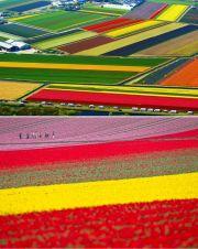 Holandija - Lisse