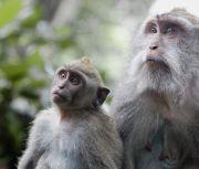 Bali Sacred monkey forrest sanctuary