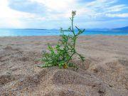 Greece Peloponnese Elafonisos Panagia beach
